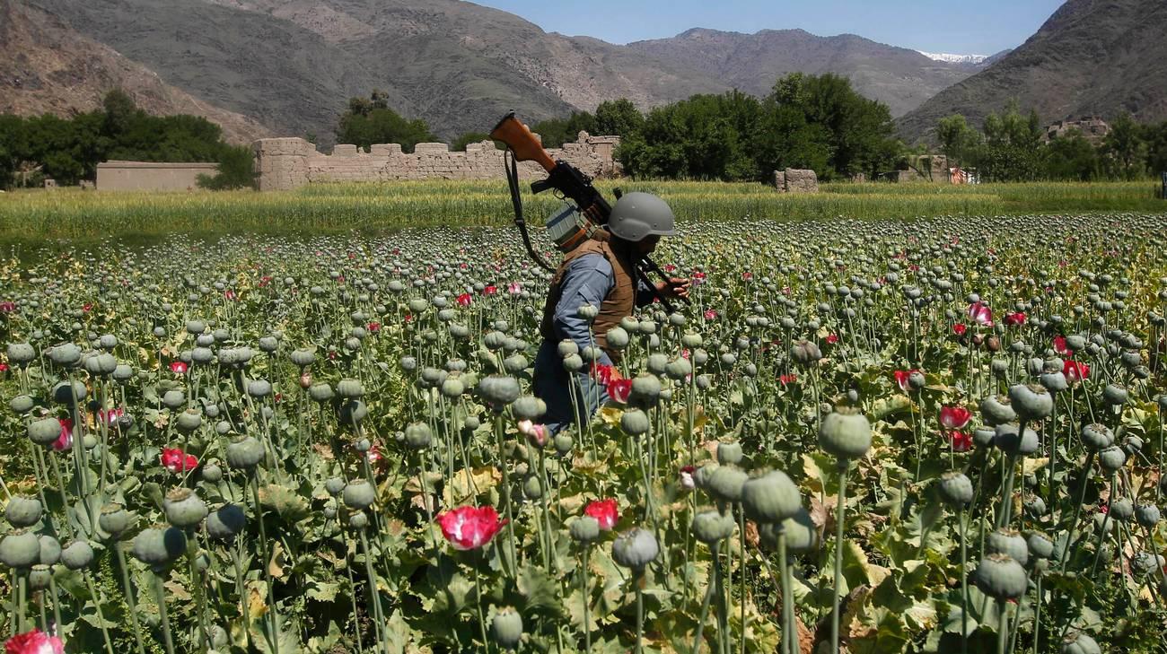 """Boom di oppio in Afghanistan nelle aree controllate dalle """"missioni di pace"""""""